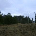 Лесная тропа из деревни Власово к Храму ( ~ 1км )